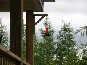 Kolibri-Tränke