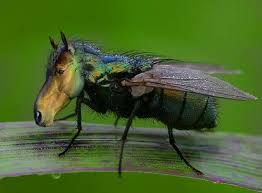 Ein Tag der Arbeit – verhungerte Insekten