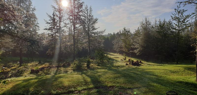Waldarbeit und andere Dinge